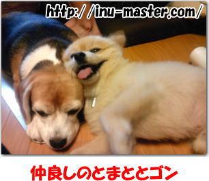 犬 信頼関係
