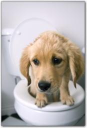 トイレ しつけ