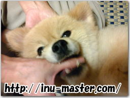 犬 噛み癖 直す しつけ方