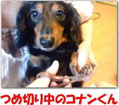 犬 爪切り